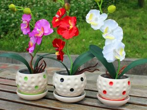 22 tipos de semillas exóticas de orquídeas Phalaenopsis