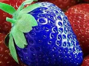 Semillas  exóticas de Fresa Azul