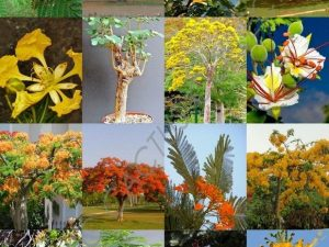 Mezcla de semillas  exóticas de arboles de flores para bonsái