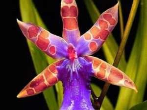 Semillas  exóticas de flores de orquídeas extrañas