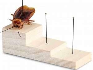 Bloque de Madera para Fijacion de Insectos