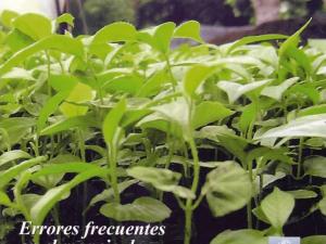 Errores Frecuentes Manejo De Semillas Y Viveros Forestales