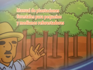 Manual: Plantaciones Forestales Para Pequeños Reforestadores