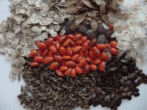 Semillas Forestales Especies Nativas Y Exóticas