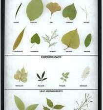 Arreglos y formas de hojas Montaje Riker para el aula